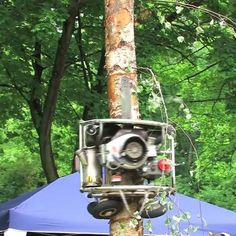 Видео: Необычное устройство-монстр, срезающее «ненужные» ветки со ствола растущего дерева. — Vinegret