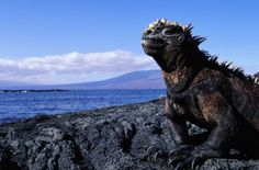 Galápagos Adventure Sailing Multi-Sport - 11 Days Trip Planner