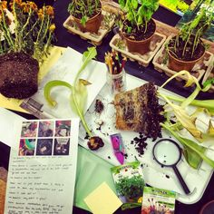 "We are investigating bulbs, seeds, and roots. This was a provocation from our ""Tiny Seed"" inquiry. -Joanne Babalis (Blog: www.myclassroomtransformation.blogspot.com)"