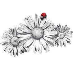 Blés illustration Contributed by Anna Castro on behalf of Valencia-based CuldeSac™ Daisy Tattoo Designs, Daisy Flower Tattoos, Sunflower Tattoos, Gerbera Daisy Tattoo, Daisies Tattoo, Vine Tattoos, Body Art Tattoos, Sleeve Tattoos, Ship Tattoos