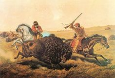 last american buffalo hunt | Other Buffalo/Bison pictures from Gallery 1
