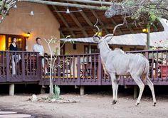 Needles Lodge Giraffe, Animals, Animales, Animaux, Giraffes, Animais, Animal