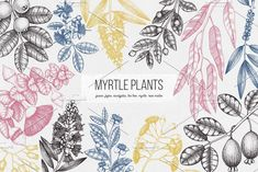 Myrtle Plants Collection by Yevheniia on @creativemarket