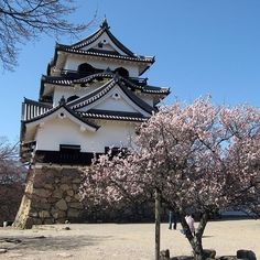 """【naoko_perugia】さんのInstagramをピンしています。 《#彦根城 と咲き初めた #桜、#滋賀 #Hikone Castle &  #Cherryblossoms, #Shiga, #Japan. From Wikipedia: """"Hikone is one of only 12 Japanese castles with the original keep, and one of only five castles listed as a national treasure."""" #HikoneCastle #JapaneseCastle #Japon #Giappone 31/3/2009》"""