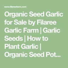 Organic Seed Garlic for Sale by Filaree Garlic Farm | Garlic Seeds | How to Plant Garlic | Organic Seed Potatoes | Organic Shallot