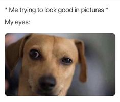 35 Random And Hilarious Pictures From Today's Internets Animal Memes Clean, Cute Animal Memes, Funny Animals, Cute Animals, Animal Funnies, Alien Aesthetic, Girl Bye, Dry Humor, Funny Mems