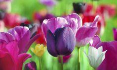 ¡Llega la primavera!