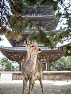 The Deer and the Monument