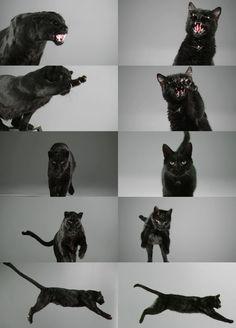 Black Panther Black Cat