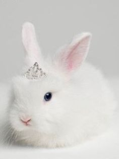 Look at her little tiara. It's adorable!