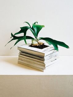15 Simple DIYs to Repurpose Those Old Stacks of Magazines Recycle those old magazines.just line wi Diy Simple, Easy Diy, Diy Vintage Books, Gazebos, Indoor Planters, Garden Planters, Old Magazines, Book Crafts, Diy Crafts