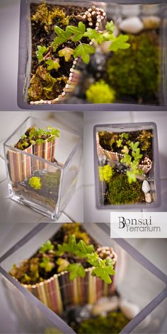 Bonsai Terrarium » bamboo retaining wall... Great idea for including orchids in my terrarium and keeping them from getting too wet