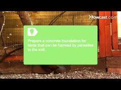 How To Build an Aviary #howtobuildanaviary
