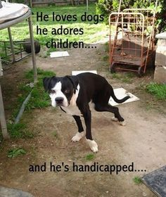 Thanks to landlord, handicapped dog will lose the only home he's ever known