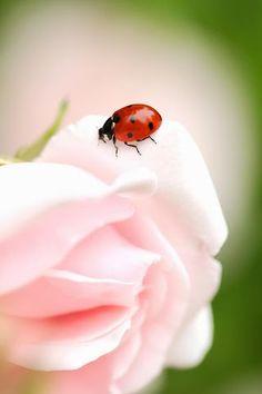 #Flowers #Ladybugs