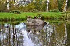 Ducks, Animal Pictures, Explore, Photography, Animals, Photograph, Animales, Animaux, Pet Pictures
