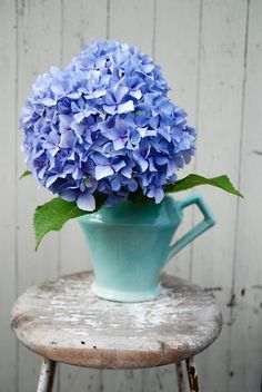 Lovely hydrangeas in vintage turquoise pitcher Happy Flowers, Fresh Flowers, Beautiful Flowers, Every Rose, Close Up Photography, Beautiful Flower Arrangements, Blue Hydrangea, Vintage Turquoise, My Flower