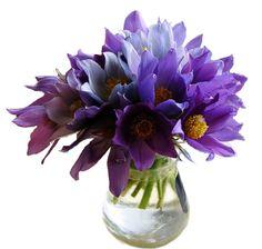 flowers, fleurs
