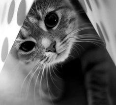 hiding kitty