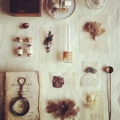old school natural history Altar, Deco Nature, Nature Collection, Nature Journal, Nature Crafts, Still Life Photography, Science And Nature, Natural History, Botany