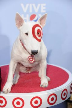 Target 39 s mascot bullseye cute pinterest bull What kind of dog is the target mascot