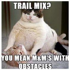 Funny Fat cat #MM, #Obstacles