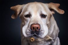 Artsy Photos Show The Moment Dogs Try To Catch Treats - UltraLinx