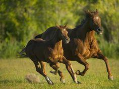 Los caballos pueden leer las emociones humanas