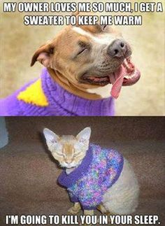 Owner Gives #Sweater http://ibeebz.com