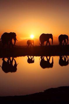elefants and sunset