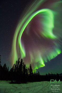 Auroras                                                       …