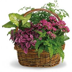 Order Secret Garden Basket from Ace Flowers, your local Houston florist, Floristeria. Send Secret Garden Basket for fresh and fast flower delivery throughout Houston, TX area. Garden Basket, Plant Basket, Dish Garden, Flower Basket, Get Well Flowers, Fast Flowers, Send Flowers, Garden Plants, House Plants