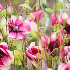 Schnittblumen Idee zum perfekten Strauß. #Blumen #Blumenstrauß #rosa #Pflanzen #Inspiration Gerbera, Plants, Inspiration, Pink, Chrysanthemums, Cut Flowers, Biblical Inspiration, Flora, Plant