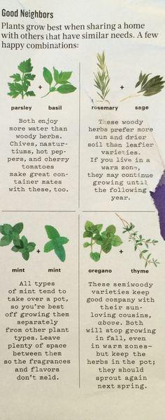 Herbs That Grow Well Together-Martha Stewart
