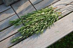 Rosmarin Herbs, Gardening, Wedding, Garten, Herb, Lawn And Garden, Horticulture