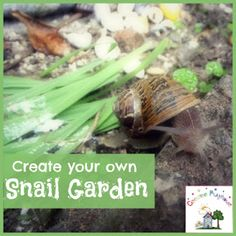 Creative Playhouse: Creating a Snail Garden - love this idea, if we ever live somewhere with snails! Science Activities For Kids, Preschool Science, Toddler Activities, Science Inquiry, Farm Activities, Science Fun, Classroom Pets, Outdoor Classroom, Head Start Preschool