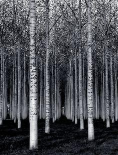 Si los arboles no te dejan ver el bosque... Talalo. (Fotografia de David Scarbrough)