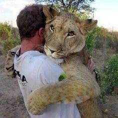 #lion #hug #awwwwwwww