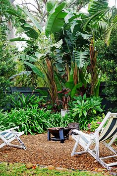 Pics sub Tropical Garden Style It is no surprise why many people aim for ., Newest Pics sub Tropical Garden Style It is no surprise why many people aim for ., Newest Pics sub Tropical Garden Style It is no surprise why many people aim for . Patio Tropical, Tropical Garden Design, Tropical Landscaping, Landscaping With Rocks, Tropical Plants, Backyard Landscaping, Backyard Ideas, Landscaping Ideas, Modern Tropical