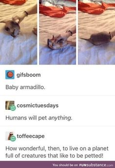 Humans will pet anything. How wonderful, then, to live on a planet full of creatures that like to be petted! Cute Funny Animals, Funny Cute, Hilarious, Tumblr Posts, Animals And Pets, Baby Animals, Tumblr Funny, Funny Memes, Animal Pictures