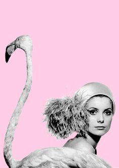 Flamingo fashion!