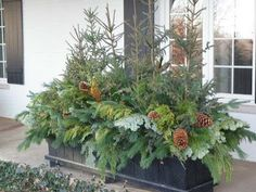 greenery and pinecones, Christmas greens, Christmas annuals, winter annual planter, winter planter Winter Window Boxes, Christmas Window Boxes, Christmas Urns, Christmas Garden, Outdoor Christmas Planters, Outside Christmas Decorations, Outdoor Planters, Evergreen Planters, Winter Container Gardening