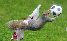 Squirrels leap to catch a football filled with titbits set up by England fan Jane Roberts in her garden. #WorldCup