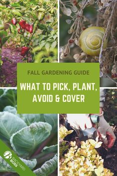 Sure, Fall is famously orange, gold and red. But it's also the best time to plant your favorite leafy greens: kale, cabbage, spinach, lettuce, broccoli, spring onions, peas, bush beans... the list is long, and we have it in our guide to Fall planting. Get started now and have the greenest spring on the block.