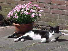Binkie, mijn kat houd de wacht bij de plant