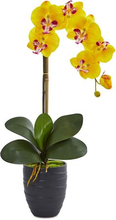 Nearly Natural Phalaenopsis Orchid Artificial Arrangement in Black Ceramic Vase Nylon Flowers, Clay Flowers, Paper Flowers, Asian Flowers, Yellow Flowers, Orchid Flower Arrangements, Orchid Images, Artificial Orchids, Black Vase