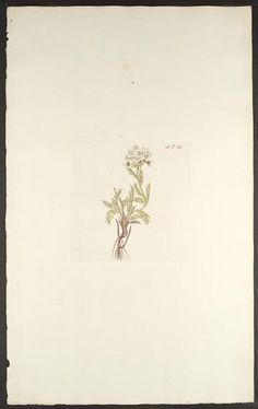 Florae Austriacae, sive, Plantarum selectarum in Austriae archiducatu. Viennæ Austriæ :Leopoldi Joannis Kaliwoda,1773-78.. biodiversitylibrary.org/page/279006