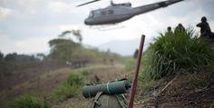 Colombia reporta aumento de cultivos de hoja de coca