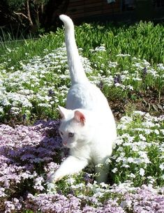 Fantastic Beautiful cats detail are offered on our internet site. Cat Aesthetic, Nature Aesthetic, Pretty Cats, Cute Cats, Beautiful Cats, Pretty Kitty, Funny Cats, Baby Animals, Cute Animals