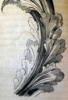 surface fragments: How to draw the Acanthus, Part II